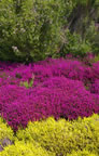 Scottish Heather Garden
