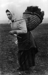 Peat Carrier