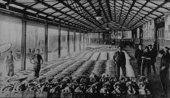 Old Photograph Fish Market Scotland