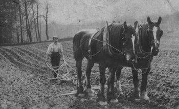 Old Photograph Horse Ploughing Scotland