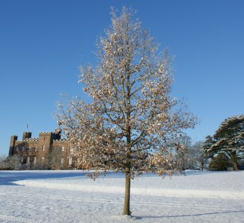 our Scotland Winter Photograph Scone Palace